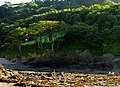 Spotlight on Trees at Combe Martin - geograph.org.uk - 218891.jpg