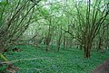 Spring Wood (geograph 1862698).jpg