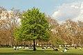 Spring in London (7119641725).jpg