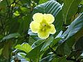 Sri Lanka Photo112.jpg