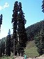Srinagar - Pahalgam views 71.JPG