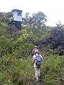 Starr-030729-0095-Cordyline fruticosa-habitat-Hanawi stream-Maui (24611748556).jpg