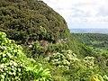 Starr-090623-1293-Aleurites moluccana-habit view road and crews putting up rock netting-Hana Hwy-Maui (24335559784).jpg