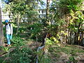 Starr 080601-5074 Passiflora edulis.jpg