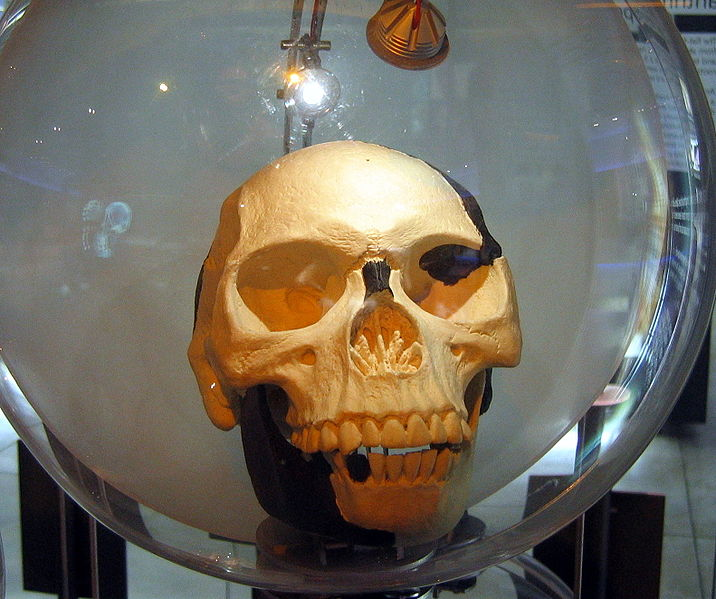 File:Sterkfontein Piltdown man2.jpg