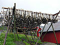 Stocafisso che si essicca nelle isole Lofoten.jpg
