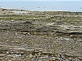 Stratified rocks on the shore - geograph.org.uk - 1367310.jpg