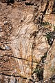 Stromatolite in metadolostone (Nash Fork Formation, Paleoproterozoic, 2.06-2.08 Ga; Rt. 130 roadcut across from Miner's Cabin Trailhead, Medicine Bow Mountains, southeastern Wyoming, USA) (15201947482).jpg