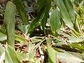 Sun grass.jpg