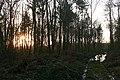 Sunset in Beche Park Wood - geograph.org.uk - 1150158.jpg