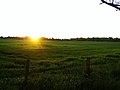 Sunset over a field in West Porton - geograph.org.uk - 452740.jpg