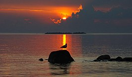 Sunset with gull.jpg