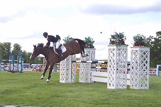 Center of balance (horse) - A show jumping rider has to stay balanced over a horse that is constantly changing position