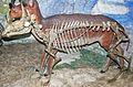 Syndyoceras skeleton.jpg