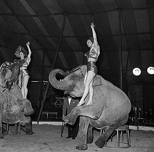 Captive Animals Protection Society - Circus elephants in Wales, 1956