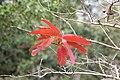 TREES (8550532083).jpg