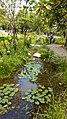 Taipei Daan Park - Small Ecological Pool - 20180805 - 01.jpg