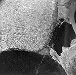 Taku Glacier, tidewater glacier terminus, September 1, 1970 (GLACIERS 6194).jpg