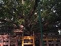 Taradih- Bodh Gaya- Bihar- DSC006.jpg