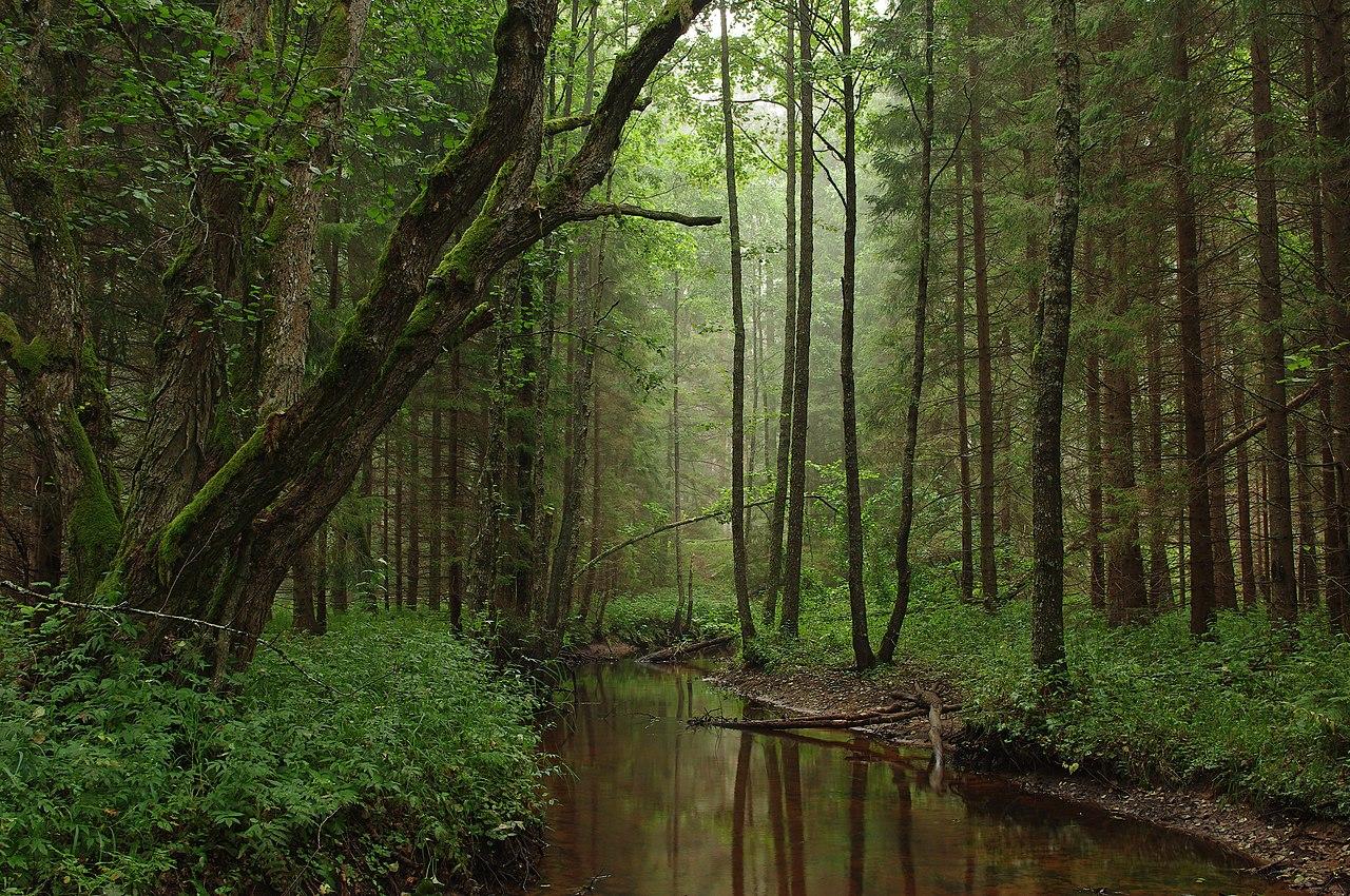 Best Nature Deep South