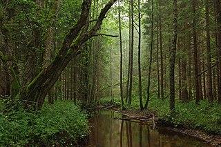 Wald (Waldung) im alltagssprac