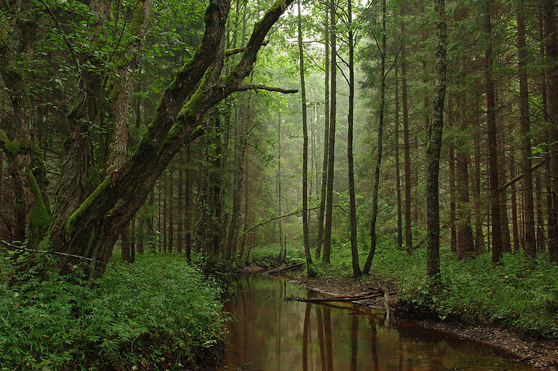 Tarvasjõgi di Cagar Alam Kõrvemaa, Estonia.