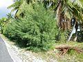 Tevaiohie - Rangiroa - panoramio (7).jpg
