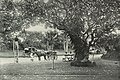 The Hanging Gardens, Malabar Hill.jpg