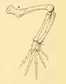 The Osteology of the Reptiles-192 iuyhgh jhg hg hv jhg fr.png