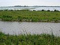 The Ouse Washes - geograph.org.uk - 463110.jpg