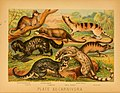 The animal kingdom (Plate XII) (6129694505).jpg