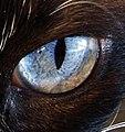 The eye 2 (258186989).jpg