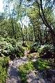The path through the birch woods - geograph.org.uk - 551945.jpg