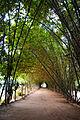Think Bamboo Jungle, Pakistan.jpg