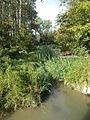 Tibutary stream. Beliczay Island. - Érd, Hungary.JPG
