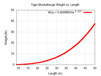 Tiger muskellunge - Image: Tigermuskielw