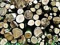 Timber, Fontmell Woods - geograph.org.uk - 1360211.jpg