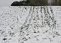 Toboggan run - geograph.org.uk - 1166265.jpg