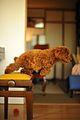 Toy Poodle Chocolat (3128772945).jpg