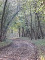 Track through Chase Woods - geograph.org.uk - 273700.jpg