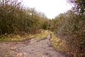 Track to Meadow Barn - geograph.org.uk - 1721720.jpg