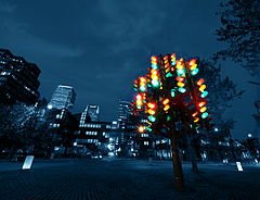 Traffic Light Tree nocą