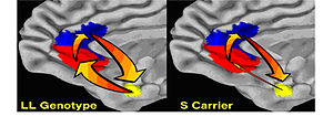 """A neural circuit underlying risk for anx..."