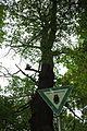Traubeneiche am Malchower See mit Schild.JPG