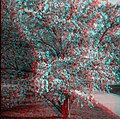 Tree (anaglyph) (519496519).jpg