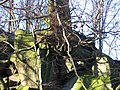 Tree clinging to Millstone Grit - geograph.org.uk - 426757.jpg