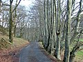 Trees by the Fernaig Road - geograph.org.uk - 348332.jpg