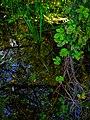 Trentino - Alto Adige Biotopo Rio dei Gamberi Photo by Giovanni Ussi - 46.jpg