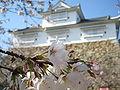 Tsuyama Castle Cherry Blossoms.JPG