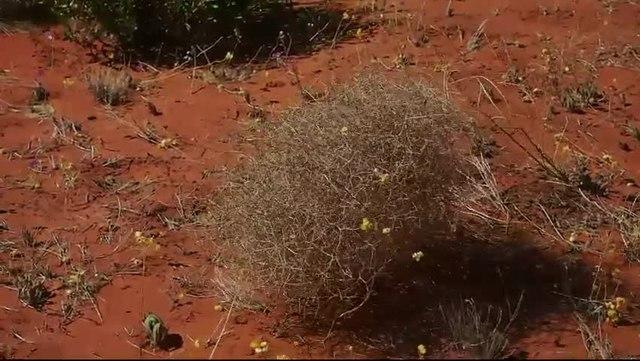 File:Tumbleweed In Motion.webm